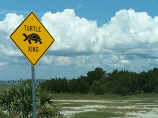 TURTLE-CROSSING