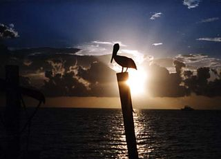 Zzzzz pelican-sunset-large