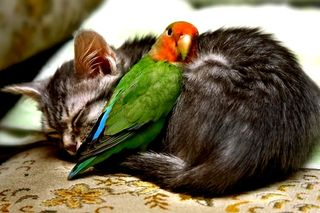 Zzzzzzz cat and bird