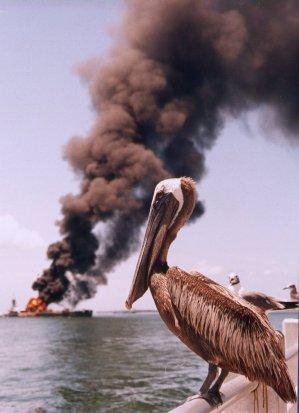 Zzzzz pelican-oil1