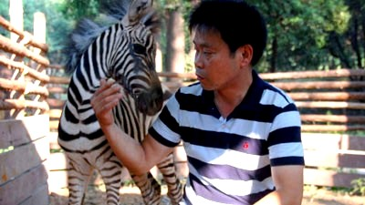 A - baby zebra with feeder at Wuhan