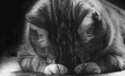 Z14 sad-cat