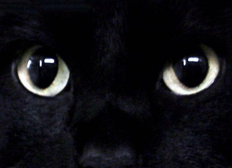 A - cat eyes